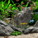 Glass fish tank - Glass fish tanks