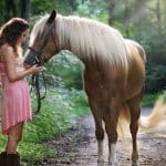 8 Ways To Conveniently Lower Your Horse's Stress and anxiety