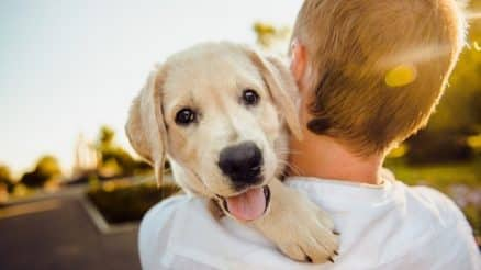 Why Can Pet Insurance Cover