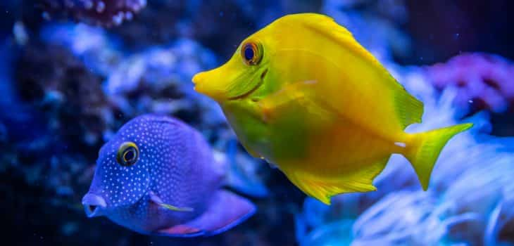Handy Tips to Take the Strain Out of Keeping Aquariums
